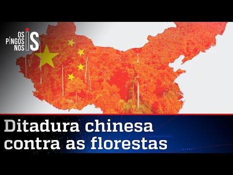 China é acusada de financiar o desmatamento no mundo