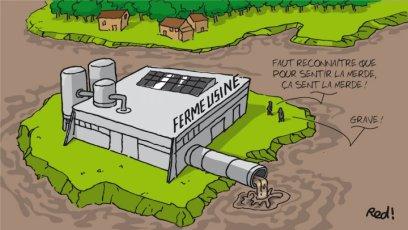 Une ferme-usine de 800 veaux a été autorisée en Pays basque