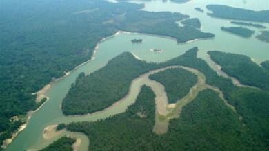 Photo of Era uma vez uma floresta tropical