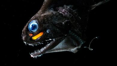Photo of Criaturas abissais: Um passeio pelo mais profundo dos oceanos