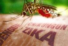 Photo of Zika, sete décadas depois