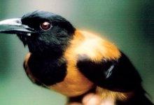 Photo of Aves venenosas?