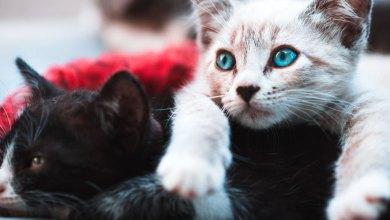 Photo of Os gatos pretos são tão fofinhos…