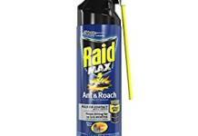 best ants sprays