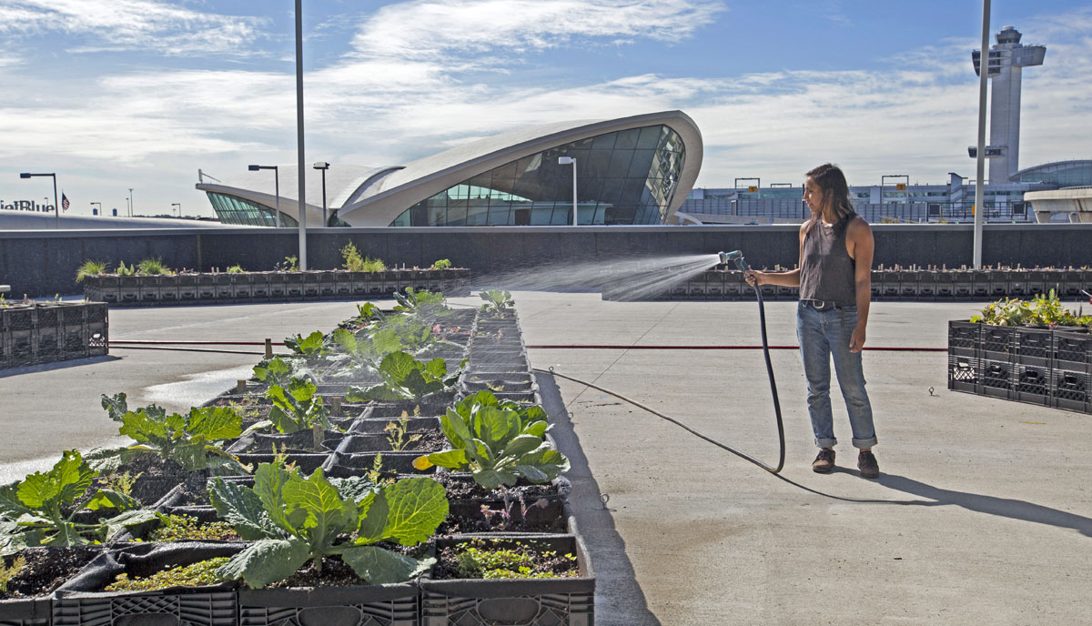JetBlue JFK T5 Farm Rooftop urban farming