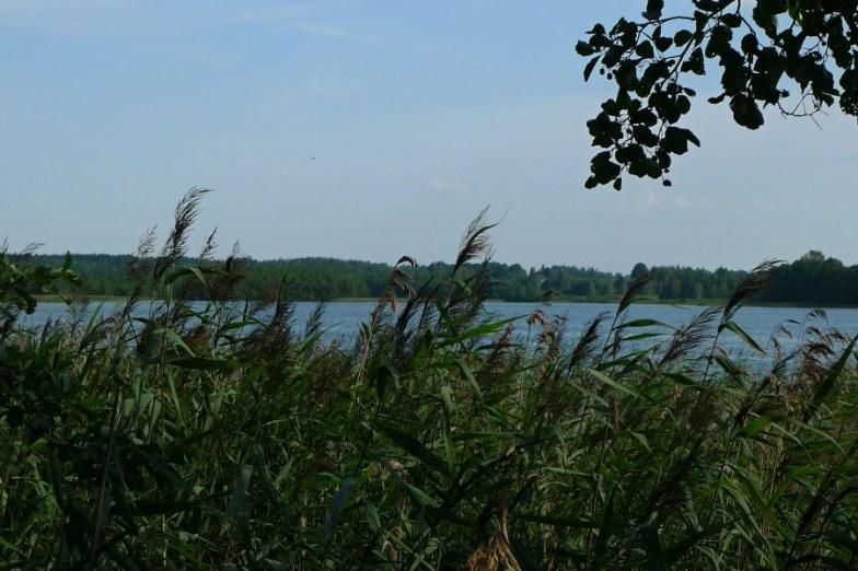 Viešinto ežeras. 2014-08-05.