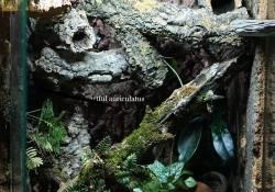gargoyle gecko terrarium ideas - artful auriculatus2