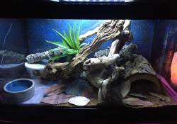 corn snake terrarium ideas - bethany zerbe