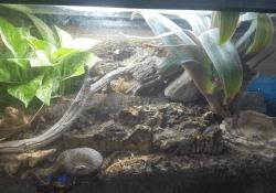 Ball python terrarium ideas - Braden Alexander