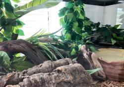 Ball python terrarium ideas - Caila Mailloux