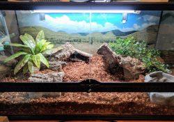 Blue tongue skink terrarium ideas - david ryerse
