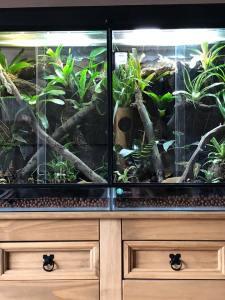 leaf-tailed gecko terrarium ideas - deb orme3