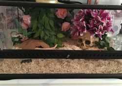 corn snake terrarium ideas - ellie hextall