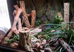 hognose snake terrarium ideas - katie wilkins3