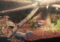 leopard gecko terrarium ideas - kaylee quinn