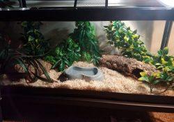corn snake terrarium ideas - laura hanna2