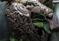 gargoyle gecko terrarium ideas - melissa baer2