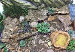 hognose snake terrarium ideas - nikki edwards2