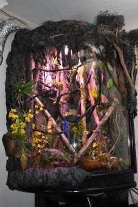 leaf-tailed gecko terrarium ideas - rudy cortez