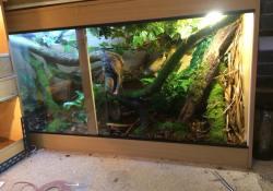 mourning gecko terrarium ideas - scott denslow - 6x2x3