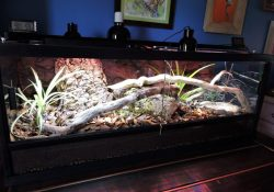 Ball python terrarium ideas - Shannon Egendoerfer
