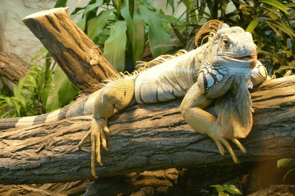 How To Build A Bioactive Terrarium For Your Reptile Reptifiles