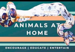 Animals at Home podcast