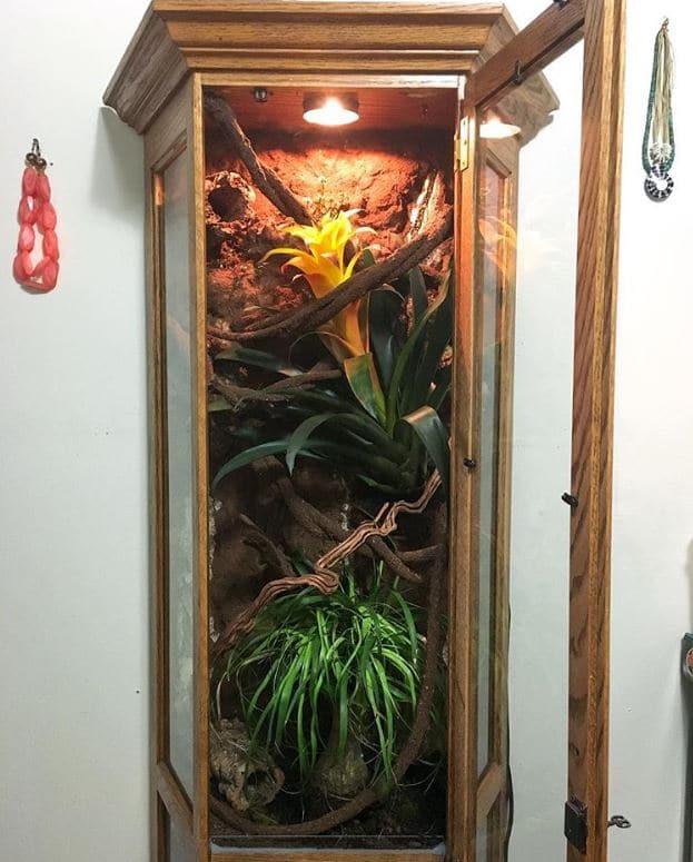 curio cabinet reptile enclosure