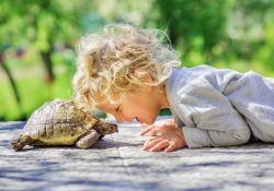 reptile anthropomorphism featured image - reptile husbandry