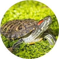 red-eared slider care guide menu image