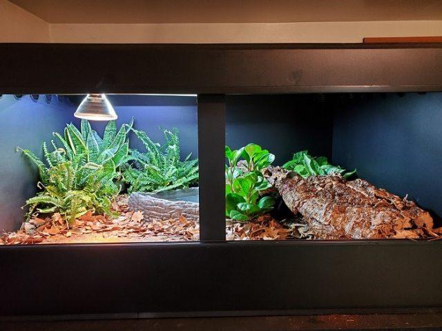 live plants vs fake plants - bioactive blue tongue skink enclosure
