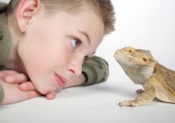 boy looking at bearded dragon