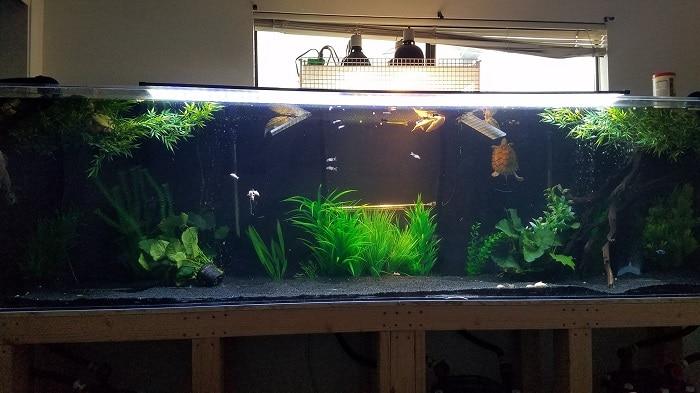 red eared slider turtle tank decor ideas