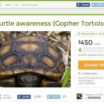 Gopher Tortoise charity at GoFundMe.