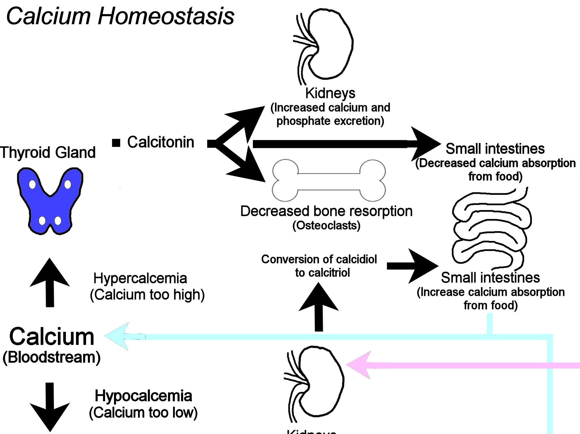 Metabolic Bone Disease In Herpetoculture