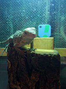 sensorpush-reptile