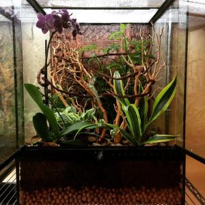 Bioactive Chameleon Set-up