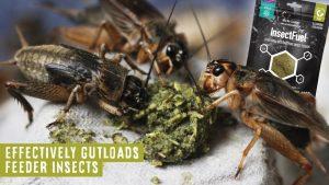 Arcadia InsectFuel