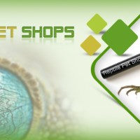 Reptile Pet Shops