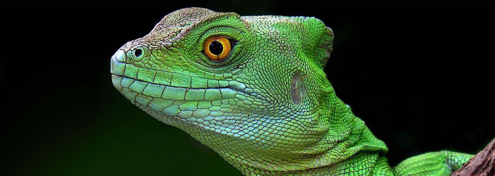 slider-reptiles-online-2