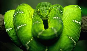 accueil-reptiles-online-serpent-vert