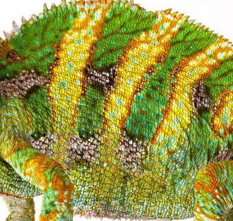 newsletter-reptiles-online