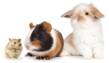 hamster-guineapig-rabbit
