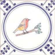 12 Robin