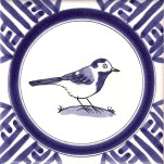 15 pied wagtail