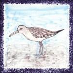 Seabird 18