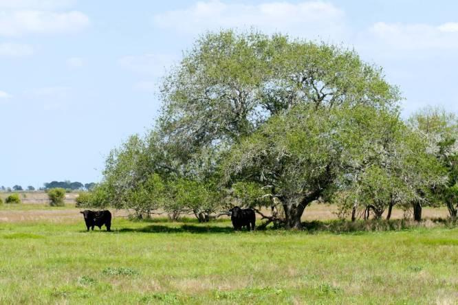 Church Creek Ranch - Colorado County Ranch for Sale - Republic Ranches within one hour of Houston - Broker Associate Tallon Martin -