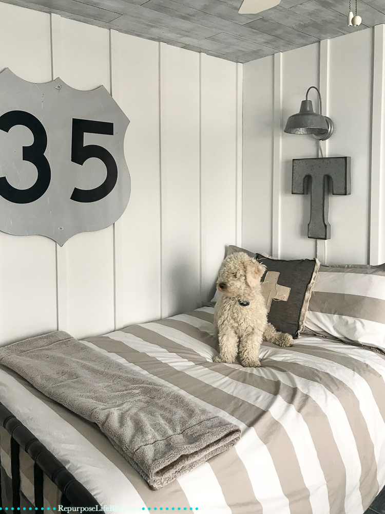 White mini goldendoodle on a gray and white striped bed. Carsiding ceiling