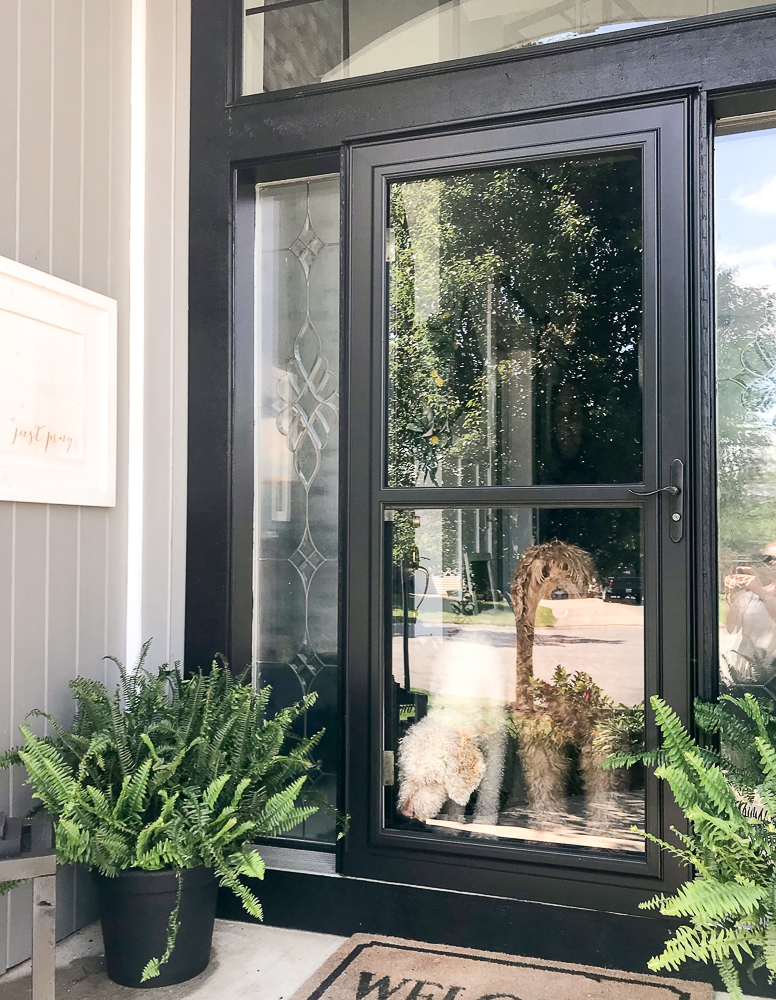3 goldendoodles looking out a front door