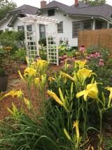 daylilies_arbor